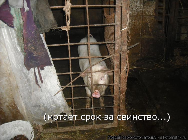 Котоматрица: (мотает срок за свинство...)