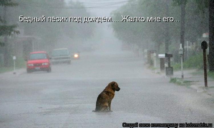 Котоматрица: бедный пёсик под дождём.....Жалко мне его...