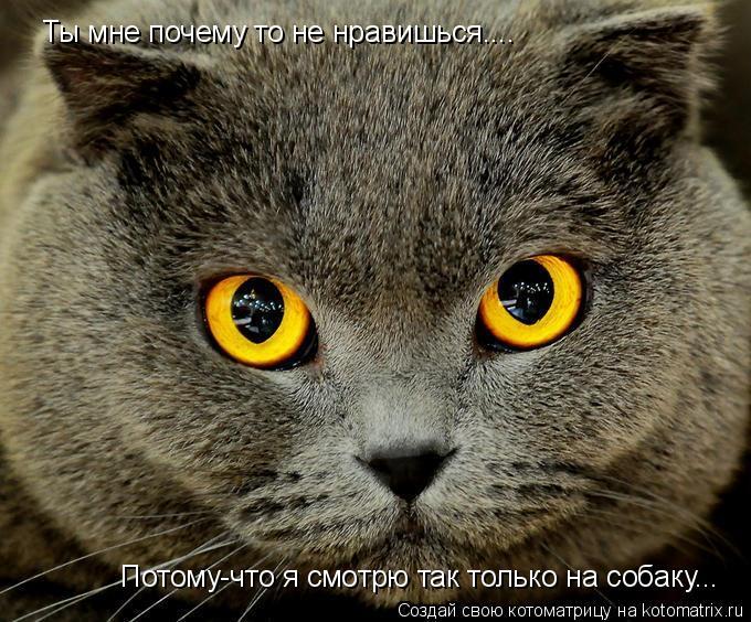 Котоматрица: Ты мне почему то не нравишься.... Потому-что я смотрю так только на собаку...