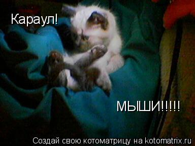Котоматрица: Караул! МЫШИ!!!!!