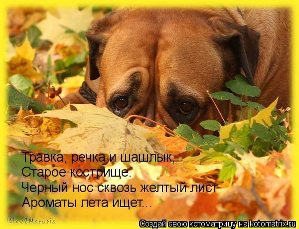 Котоматрица: Травка, речка и шашлык, Старое кострище… Черный нос сквозь желтый лист Ароматы лета ищет...