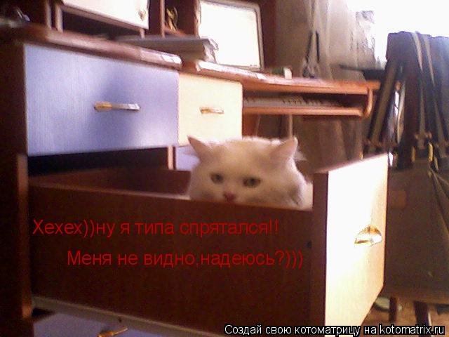 Котоматрица: Хехех))ну я типа спрятался!! Меня не видно,надеюсь?)))