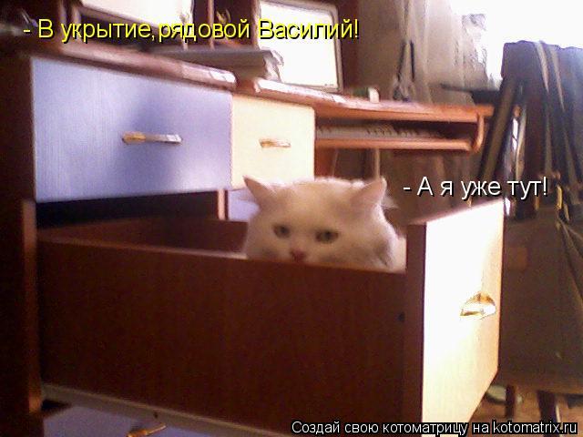 Котоматрица: - В укрытие,рядовой Василий! - А я уже тут!