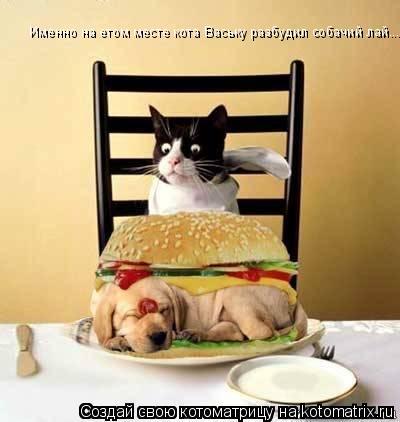 Котоматрица: Именно на етом месте кота Ваську разбудил собачий лай....