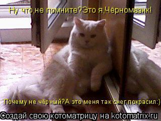 Котоматрица: Ну что,не помните?Это я,Чёрномазик! Почему не чёрный?А это меня так снег покрасил:)