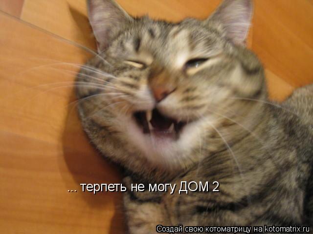 Котоматрица: терпеть не могу ДОМ 2 ...
