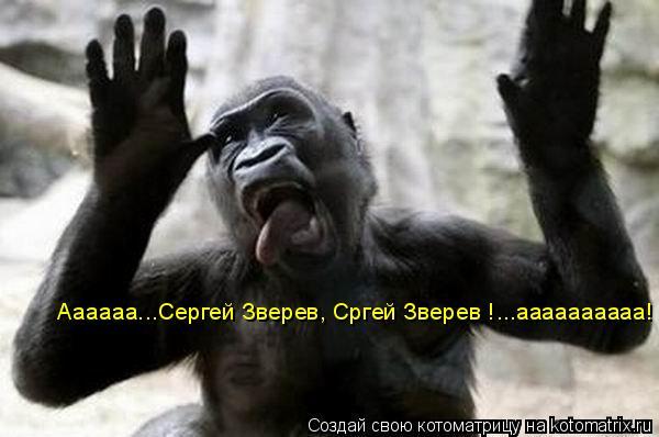 Котоматрица: Аааааа...Сергей Зверев, Сргей Зверев !...аааааааааа!