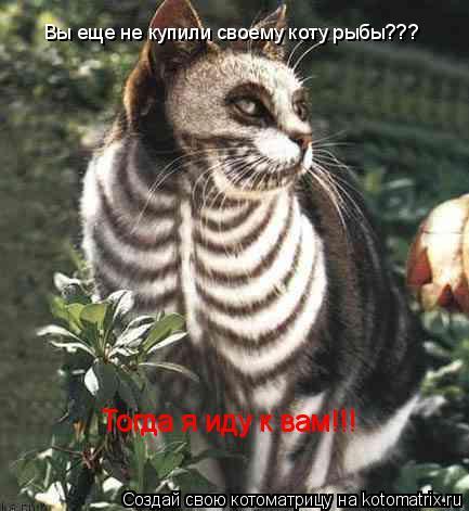 Котоматрица: Вы еще не купили своему коту рыбы??? Тогда я иду к вам!!! Тогда я иду к вам!!!
