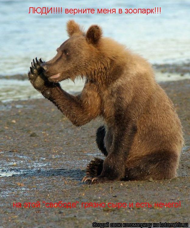 """Котоматрица: на этой """"свободе"""" грязно сыро и есть нечего! ЛЮДИ!!!! верните меня в зоопарк!!!"""
