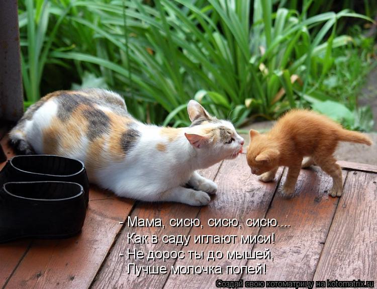 Котоматрица: - Мама, сисю, сисю, сисю.... Как в саду иглают миси! - Не дорос ты до мышей, Лучше молочка попей!