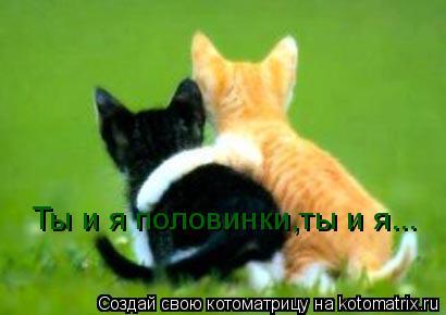 Котоматрица: Ты и я половинки,ты и я...