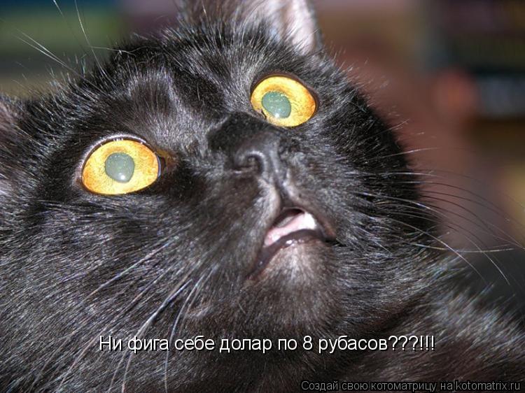 Котоматрица: Ни фига себе долар по 8 рубасов???!!! Ни фига себе долар по 8 рубасов???!!!