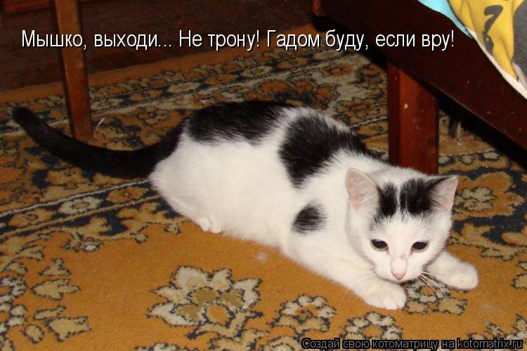 Котоматрица: Мышко, выходи... Не трону! Гадом буду, если вру!