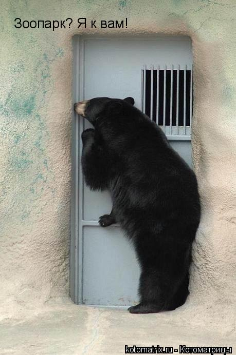 Котоматрица: Зоопарк? Я к вам!