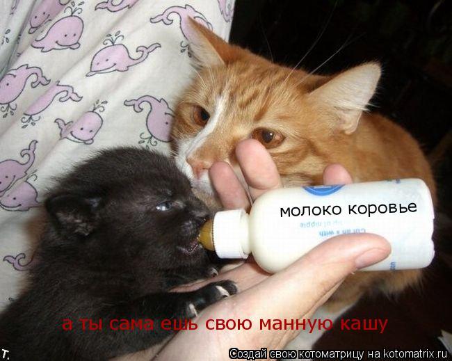 Котоматрица: молоко коровье а ты сама ешь свою манную кашу