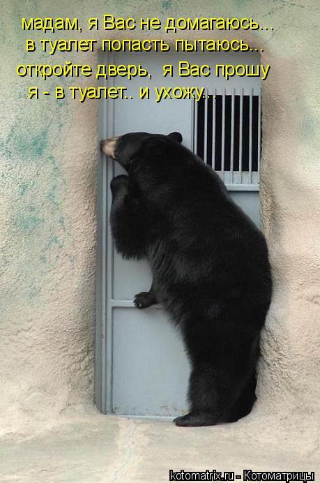Котоматрица: мадам, я Вас не домагаюсь... откройте дверь,  я Вас прошу я - в туалет.. и ухожу... в туалет попасть пытаюсь...