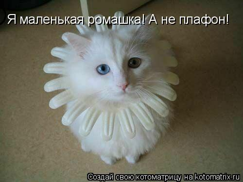 Котоматрица: Я маленькая ромашка! А не плафон!