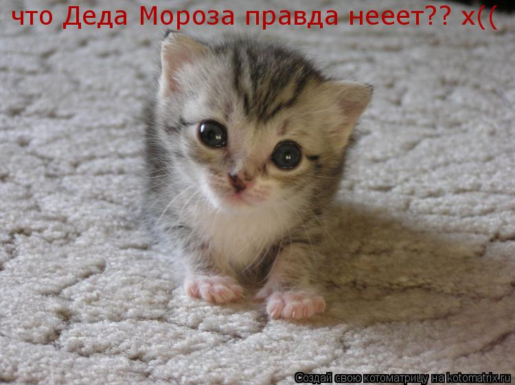 Котоматрица: что Деда Мороза правда нееет?? х((