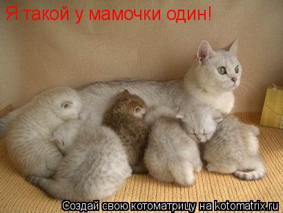 Котоматрица: Я такой у мамочки один! _