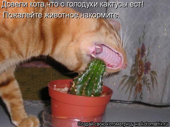 Котоматрица: Довели кота,что с голодухи кактусы ест! Пожалейте животное,накормите.