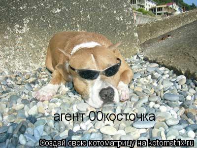 Котоматрица: агент 00косточка