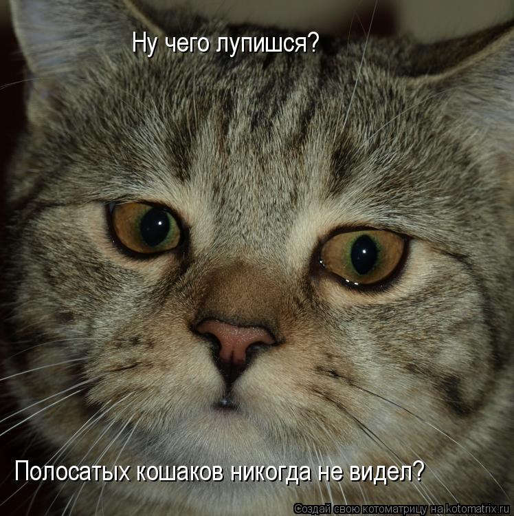Котоматрица: Ну чего лупишся? Полосатых кошаков никогда не видел?