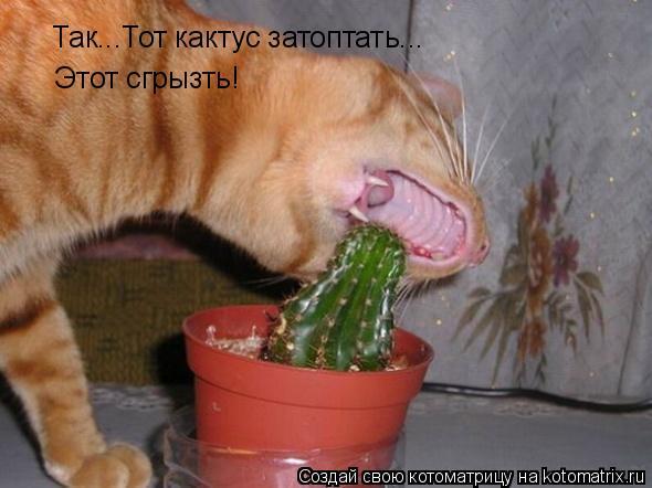 Котоматрица: Так...Тот кактус затоптать... Этот сгрызть!