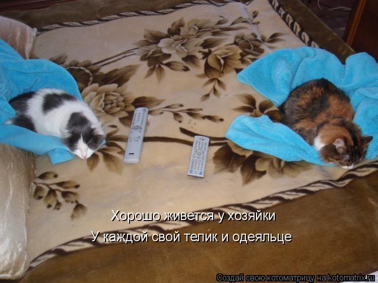 Котоматрица: Хорошо живется у хозяйки У каждой свой телик и одеяльце