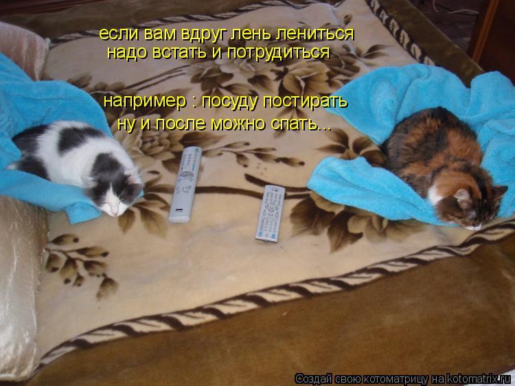Котоматрица: если вам вдруг лень лениться надо встать и потрудиться например : посуду постирать ну и после можно спать...