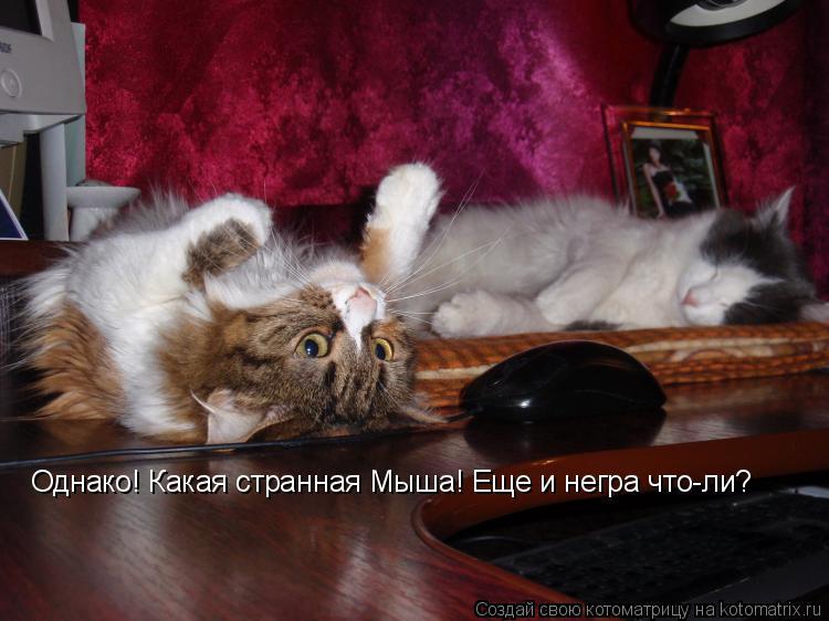 Котоматрица: Однако! Какая странная Мыша! Еще и негра что-ли?