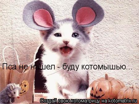 Котоматрица: Пса не нашел - буду котомышью...