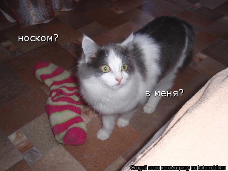 Котоматрица: носком? в меня?