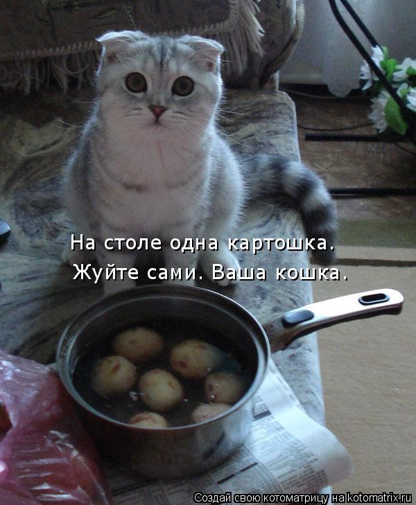 Котоматрица: На столе одна картошка. Жуйте сами. Ваша кошка.