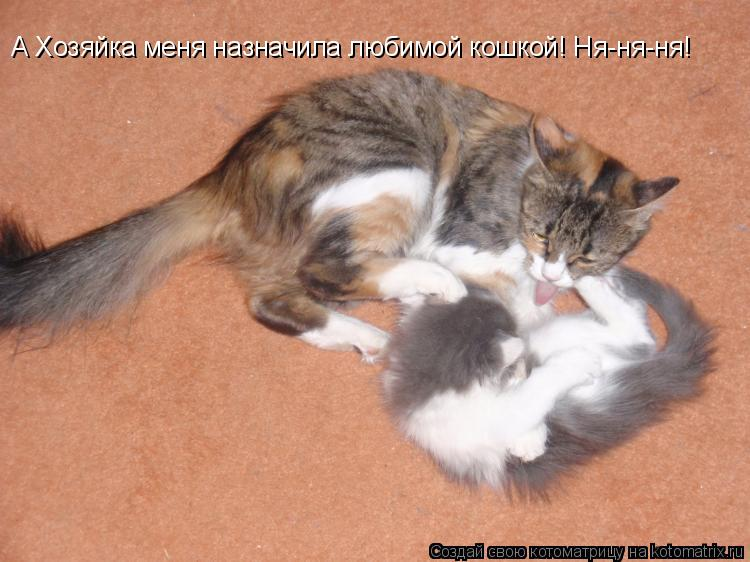 Котоматрица: А Хозяйка меня назначила любимой кошкой! Ня-ня-ня!