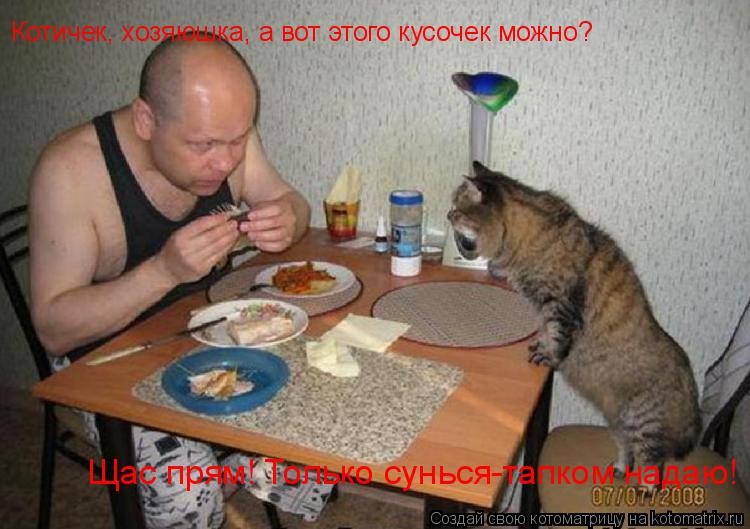 Котоматрица: Котичек, хозяюшка, а вот этого кусочек можно? Щас прям! Только сунься-тапком надаю!