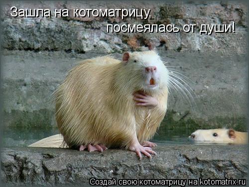 Котоматрица: Зашла на котоматрицу, посмеялась от души!