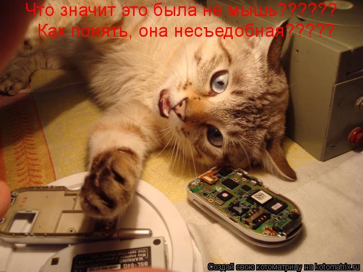 Котоматрица: Что значит это была не мышь?????? Как понять, она несъедобная?????