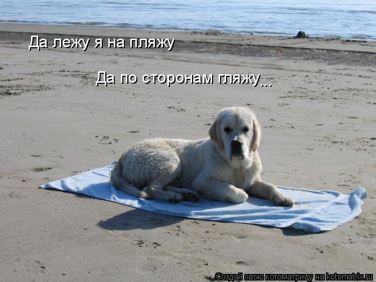 Котоматрица: Да лежу я на пляжу Да по сторонам гляжу ...