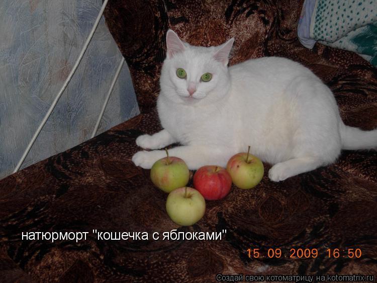 "Котоматрица: натюрморт ""кошечка с яблоками"""