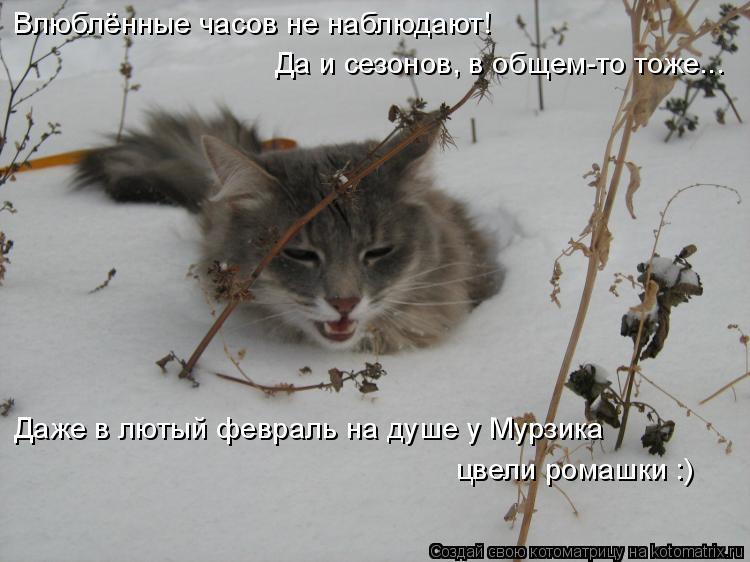 Котоматрица: Влюблённые часов не наблюдают!   Да и сезонов, в общем-то тоже... Даже в лютый февраль на душе у Мурзика цвели ромашки :)