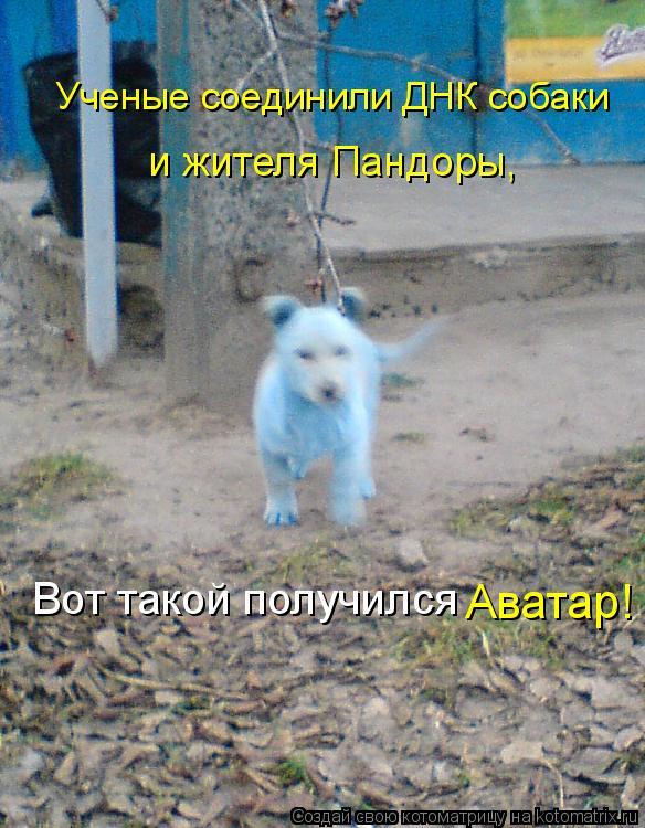 Котоматрица: Ученые соединили ДНК собаки  и жителя Пандоры,  Вот такой получился  Аватар!