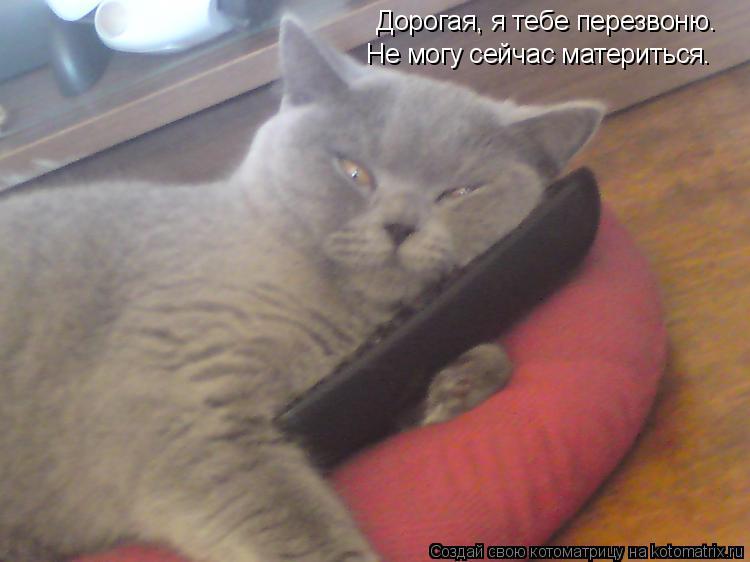 Котоматрица: Дорогая, я тебе перезвоню. Не могу сейчас материться.
