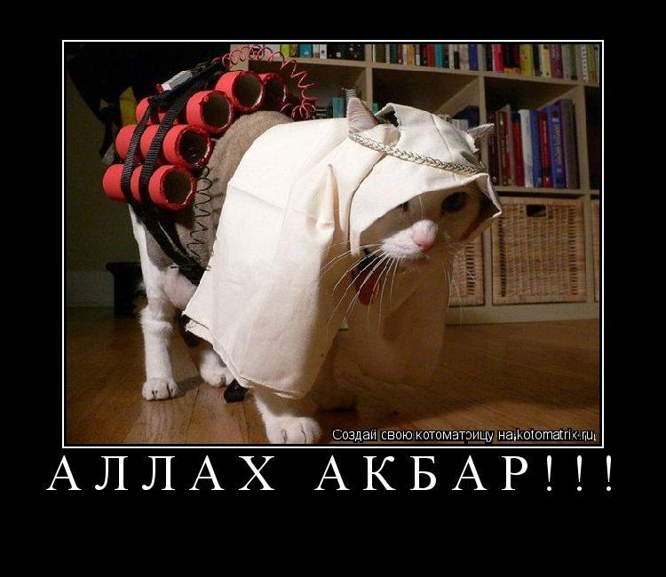 Котоматрица: АЛЛАХ АКБАР!!!
