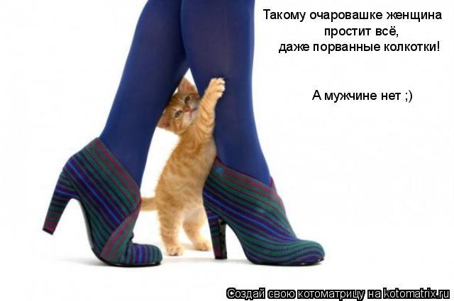 Котоматрица: Такому очаровашке женщина  простит всё, даже порванные колкотки! А мужчине нет ;)
