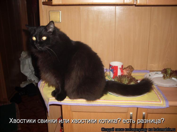 Котоматрица: Хвостики свинки или хвостики котика? есть разница? Хвостики свинки или хвостики котика? есть разница?