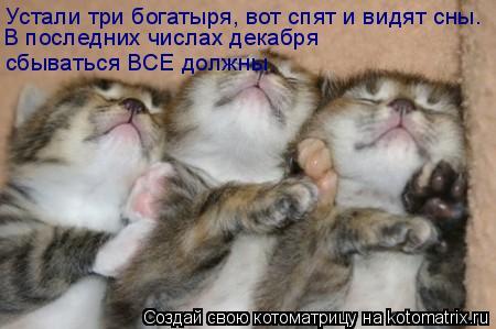 Котоматрица: Устали три богатыря, вот спят и видят сны. В последних числах декабря сбываться ВСЕ должны