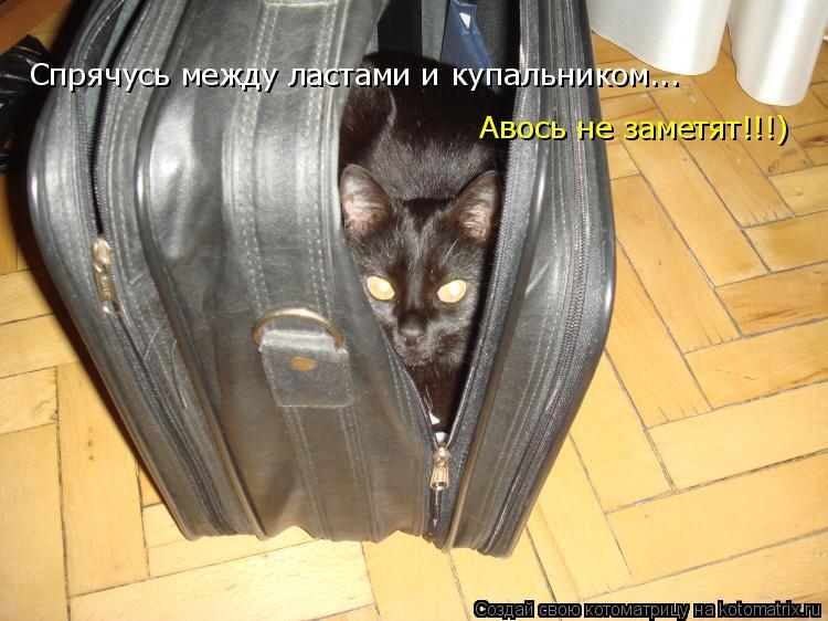 Котоматрица: Спрячусь между ластами и купальником...  Авось не заметят!!!)