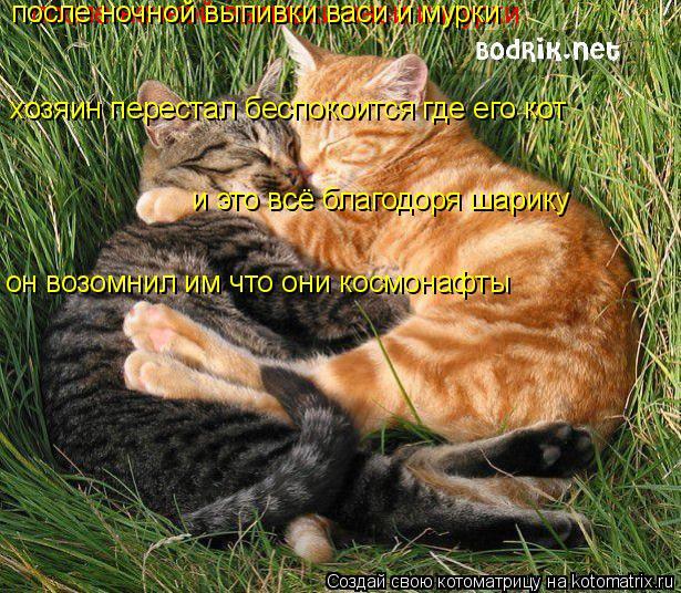 Котоматрица: после ночной выпивки васи и мурки после ночной выпивки васи и мурки хозяин перестал беспокоится где его кот и это всё благодоря шарику он в
