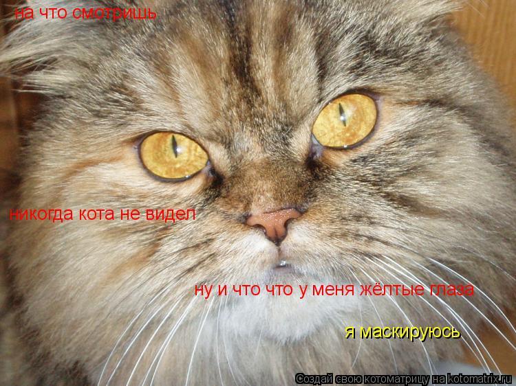 Котоматрица: на что смотришь никогда кота не видел ну и что что у меня жёлтые глаза я маскируюсь