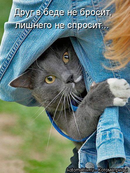 Котоматрица: Друг в беде не бросит, лишнего не спросит...